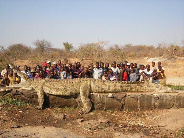 Monster Crocodile - Zimbabwe